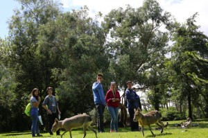 fota-wildlife-park